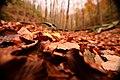 Il monte Polveracchio in autunno inverno il colore rosso.jpg