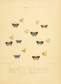 Illustrations Diurnal Lepidoptera 2 - Plate 57.png