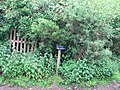 Improvised letter-box - geograph.org.uk - 1381273.jpg