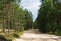 In the forest near Yashera-1.jpg