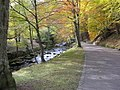 In the woods at Bad Wildbad - geo.hlipp.de - 6235.jpg