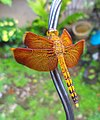 Indonesian Red-Winged Dragonfly.jpg