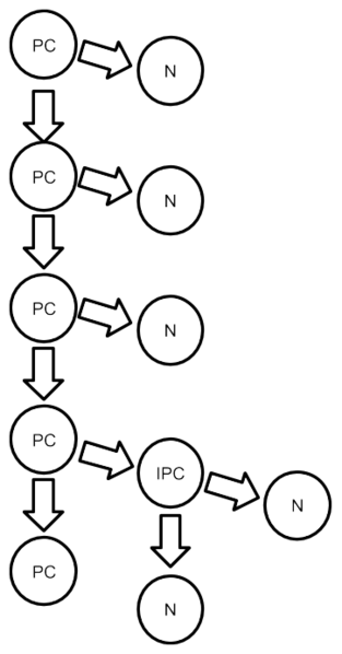 File:Intermediate Progenitor Cell Lineage.png