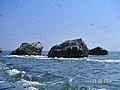 Islas Ballestas - panoramio (4).jpg