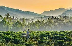 Jaflong Sylhet.jpg