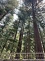 JageshwarTemple-Garud-Uttarakhand-6.jpg