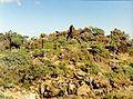 January Parc Natural - Lanzarote Photography1992 - panoramio.jpg