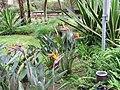 Jardim Antonio Borges (14008767134).jpg