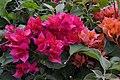 Jardim Botânico da Madeira DSC 0224 (14699754752).jpg