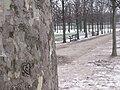 Jardindestuileries-03.jpg