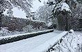 Jardins de la Croze en hiver.jpg