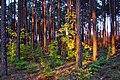 Jesień w Borach Dolnośląskich 5 - panoramio.jpg