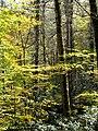 Joyce-kilmer-tree-nc7.jpg