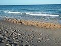 Jupiter FL Coral Cove Park beach02.jpg
