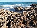 Jupiter FL Coral Cove Park beach07.jpg