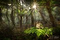 Jurassic Forest, Cathedral of Ferns - Blue Mountains, New South Wales.jpg
