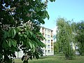 KALISZ majowe obrazki 69 - panoramio.jpg