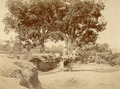 KITLV 100123 - Unknown - Mango Tree in a dry riverbed at Kothoor at Poona in India - Around 1875.tif
