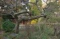 Kansen-En(Honey-Fountain Park) - 甘泉園 - panoramio (7).jpg