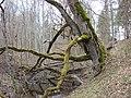 Kastrānes pilskalns, Suntažu pagasts, Ogres novads, Latvia - panoramio - M.Strīķis (2).jpg