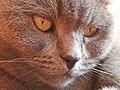Katzengesicht 20200121.jpg