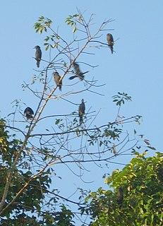 Kumarakom Bird Sanctuary National park in Kerala, India