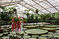 Kew Gardens - Waterlily House - Wide.jpg