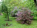 Kharkiv botanical garden 3.JPG