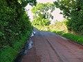 Kilntown Road, Dromore - geograph.org.uk - 1457163.jpg