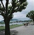 Kinderen op de promenade langs de Main met op de achtergrond de verkeersbrug met, Bestanddeelnr 254-6002.jpg