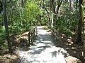 Koreshan SHS path02.jpg