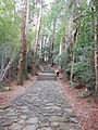 Kumano Kodo pilgrimage route Daimon-zaka World heritage 熊野古道 大門坂26.JPG