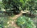 Kunming Botanical Garden - DSC02926.JPG