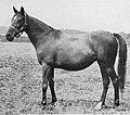 La Roche (horse).jpg