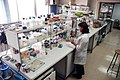 Laboratorio Quimica U de Chile.jpg