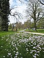 Lady's Smock (Cardamine pratensis L.) - geograph.org.uk - 1261420.jpg