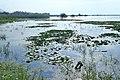 Lake Kerkini kz01.jpg