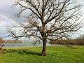Lake Plastira - Tavropou.jpg