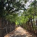 Lane of forest.jpg