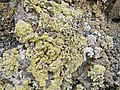 Lanzarote - stone of a wall covered with sulfur and lichen.jpg