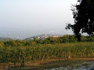 Valpolicella - A vineyard in Valpolicella