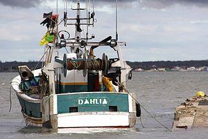 Le chalutier-fileyeur Dahlia (8).JPG