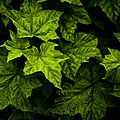 Leaves (2684773071).jpg
