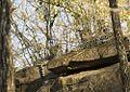 Leopard Cubs Satpura.jpg