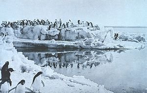 George Murray Levick - Adélie penguins on the ice foot at Cape Adare. Photo by George Murray Levick, 1911 or 1912.