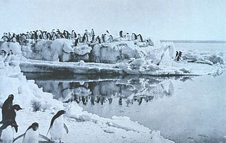 Cape Adare - Adélie penguins on an ice foot at Cape Adare – photo by George Murray Levick, 1911 or 1912
