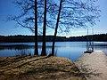Lieson Kaukasenjärven ranta puut - panoramio.jpg