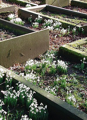 Hull General Cemetery - Plain graves in the Quaker burial section of the General Cemetery (2008)