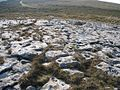 Limestone Pavement on the Great Orme - geograph.org.uk - 283999.jpg