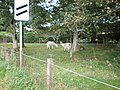 Llamas near Farr - geograph.org.uk - 987861.jpg